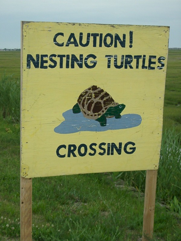 Turtle Crossing Sign in Margate, NJ