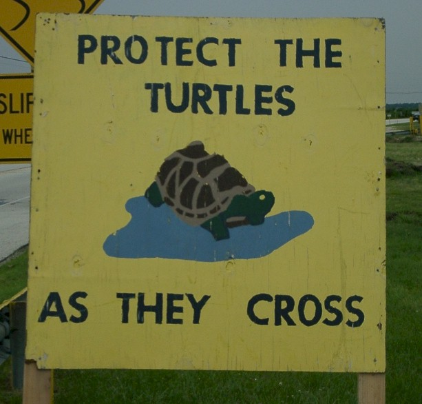 Another Turtle Crossing Sign in Margate, NJ